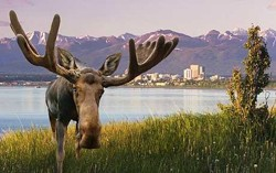 moose Anchorage
