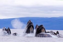 Chatham Strait, Alaska